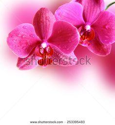 Orchid Flowers Pink White Stock fotografie | Shutterstock