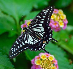 From Gavnø butterfly house