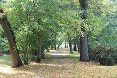 Ein flauschiger Blätterteppich im Park im #Herbst