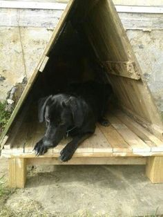 Dog house out of recycled pallets