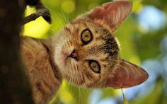 wallpaper desktop cat