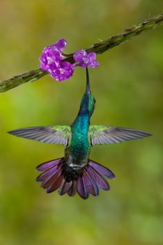Check out this blog post! 'Hummingbirds of Costa Rica'
