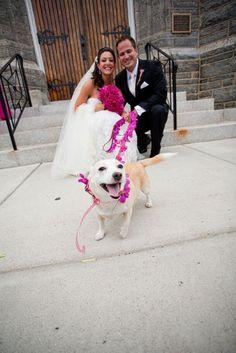 dog @ wedding
