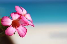 #Nature on Providenciales via @andiperullo. #tropical #flower #Caribbean