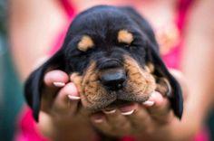 ♡♡♡ Daiquiri's puppy ♡♡♡