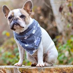 My plan for today? Same as always: be awesome and look sexy  #frenchie #French #frenchbulldog #bulldog #bully #frenchiesofinstagram #frenchbulldogsofinstagram #dailyfluff #sexy #margot #mallowsmates #ig_bullys #thefrenchiepost #frenchielove_feature #mannysbuddyoftheweek #frenchielove #dailydog #outdoors #adventure #pnw #pnwadventure #lacyandpaws #pawsome #pawsomedogz #loveabully #houndsbazaar @waggedwear @frenchies.1 @frenchiesoverload @frenchie_photos @dogsofinstagram @dogs_of_world…