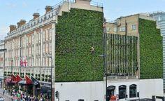 Maior jardim vertical de Londres é instalado em hotel
