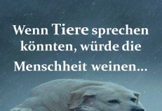 Wenn Tiere Sprechen Könnten Dog Quotes, Wisdom Quotes, Earth Quotes, Cool Slogans, Vegan Quotes, Going Vegan, Animals Beautiful, In This World, Shit Happens