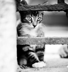 """If homeless cats could talk, they would probably say, give me shelter, food, companionship, and love, and I'll be yours for life."" --Susan Easterly"
