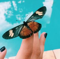 🍁 @notgivinmyname Cute Creatures, Beautiful Creatures, Like Animals, Baby Animals, Adorable Animals, Photographie Portrait Inspiration, Arte Pop, Beautiful Butterflies, Animal Photography