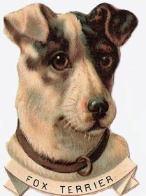MudBay Images: Fox Terrier