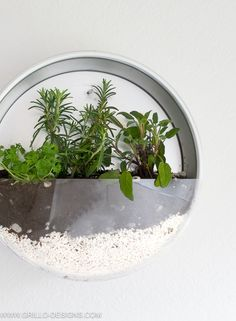 diy indoor herb planter attached to wall