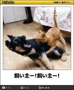 飼い主ー!飼い主ー! Animals And Pets, Funny Animals, Cute Animals, Witty Remarks, Smiling Cat, I Love Dogs, Pet Dogs, Comedy, Funny Pictures