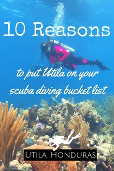 10 reasons to put Utila on your scuba diving bucket list - World Adventure Divers - Scuba diving, Utila, Honduras - read more on https://worldadventuredivers.com/2017/04/07/10-reasons-to-put-utila-on-your-scuba-diving-bucket-list/