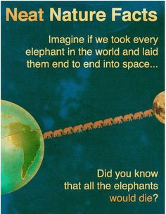 The truth about Elephants.