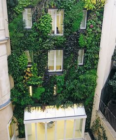 Paris is often listed as one of the most beautiful cities in the world, but it's about to get even more attractive. A new law was passed and now Parisians are not only allowed, but also encouraged to have their own urban gardens.