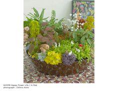 musubi - Fairy Garden