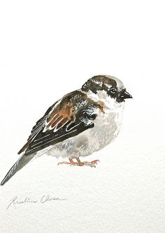 Sparrow Study #8