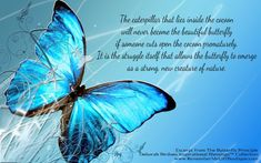 Grandpa and I like to think that whenever we see a butterfly nearby, that its KK and she has come down from Heaven just to say hello.We love you Kayla and miss you so much --db Blue Butterfly Wallpaper, Butterfly Background, Flower Wallpaper, Butterfly Quotes, Butterfly Kisses, Butterfly Pictures, Butterfly Art, Blue Butterfly Meaning, Butterfly Cocoon