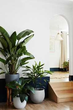 Plant style: how to greenify your space with ivy muse indoor Indoor Planters, Indoor Garden, Plants Indoor, Concrete Planters, Interior Plants, Interior And Exterior, Boho Dekor, Interior Design Colleges, Decoration Plante