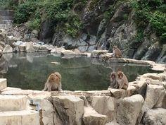 Snow monkeys in Nagano