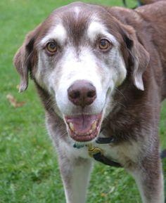 The Dog Blogger's Woofer, an old soul