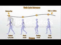 Understanding a walk cycle