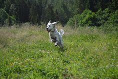 Gårdstunet Hundepensjonat: Det gode hundeliv på landet!