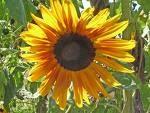 Kid Activities | Sunflower Theme Ideas