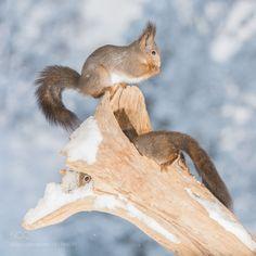 winter home by geertweggen #animals #animal #pet #pets #animales #animallovers #photooftheday #amazing #picoftheday
