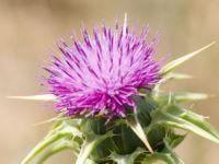 Caminata en el campo Endometriosis, Aloe Vera, Aromatherapy, Diabetes, Essential Oils, Cancer, Healing, Herbs, Flowers