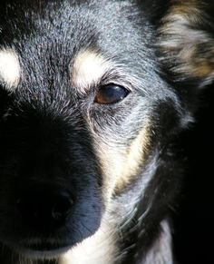 """""""Today I'm grateful for our precious four legged pal Phantom. She's always there for a hug and a look that knows you're loved and is a very special member of our family.'  Eileen-Rita from NZ 7.8.2012  #365Grateful"""