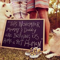 Pregancy announcement I'm expecting Pregnant. Pregnancy announcements with dogs