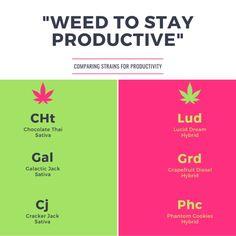 Cannabis Branding, Social Posts, Social Media Marketing, Creative.   #CannabisBranding #CannabisMarketing #Cannabis #Creative #Marketing #Infographics