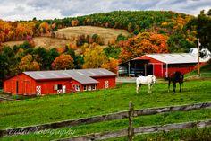 Fall foliage on Vermont horse farm