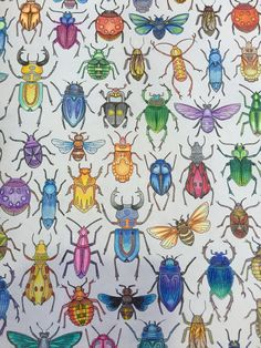 Johanna Basford Secret Garden Coloring Books Adult Beetles Insects Bugs Ideas Book Chance