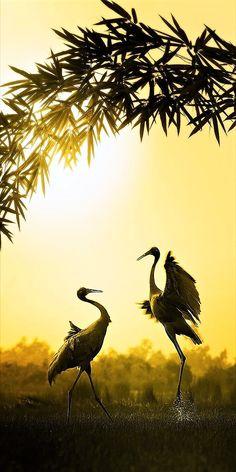 Red Headed Cranes