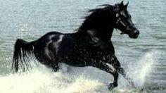Resultado de imagen de caballo azabache vicente fernandez