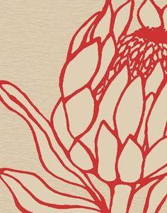 """Résultat de recherche d'images pour """"protea design"""""""