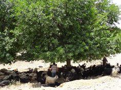 Goatherd near Diyarbakir