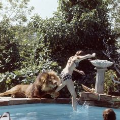 And this is Neil grabbing and attempting to bite her leg as she jumps in the water. | These Photos Of A Teenage Melanie Griffith And Her Pet Lion In The 1970s Are Quite Something