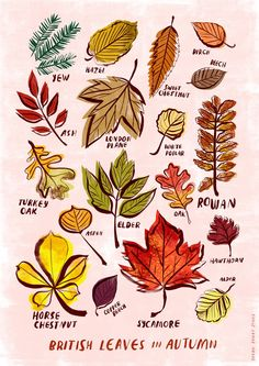 """British Leaves of Autumn"" by Sarah Tanat Jones More"