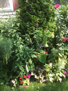 tropical garden - Tropical Garden 2016
