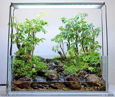 The Life of a Tortoise Terrarium Tank, Aquarium Terrarium, Moss Terrarium, Terrarium Plants, Aquarium Fish, Vivarium, Miniature Terrarium, Indoor Water Garden, Aquarium Design