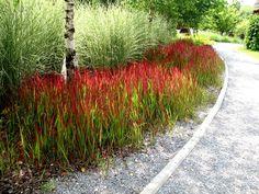 Ornamental Grasses, Land Art, Flower Beds, Amazing Flowers, Landscape Architecture, Garden Inspiration, Garden Landscaping, Sidewalk, Country Roads