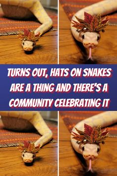 #Turns #Hats #Snakes #Thing #Community #Celebrating