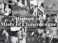 History of Misty of Chincoteague - Interesting history of the ponies and books about them by Marguerite Henry Chincoteague Ponies, Chincoteague Island, Horse Story, Horse Books, All In The Family, Marguerite Henry, Beautiful Horses, Animals Beautiful, Interesting History