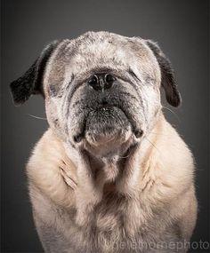 photos de chiens très âgés - et pas de trucage