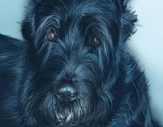 """Check out new work on my @Behance portfolio: """"Donald - best friend"""" http://be.net/gallery/34395961/Donald-best-friend"""
