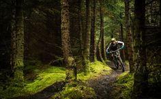 For more great pics, follow bikeengines.com #mtb #nature #woods #bike #trees #ride